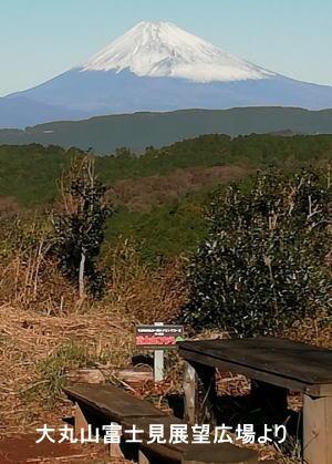 伊東里山ブログ